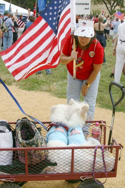 patriotic poodles